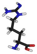 aaa-L-arginine-3D-sticks-(tall)